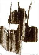 Jean-Charles FAREY. Relevé d'ombres portées - bégonia nénuphar, 2012.